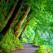 nature-nature
